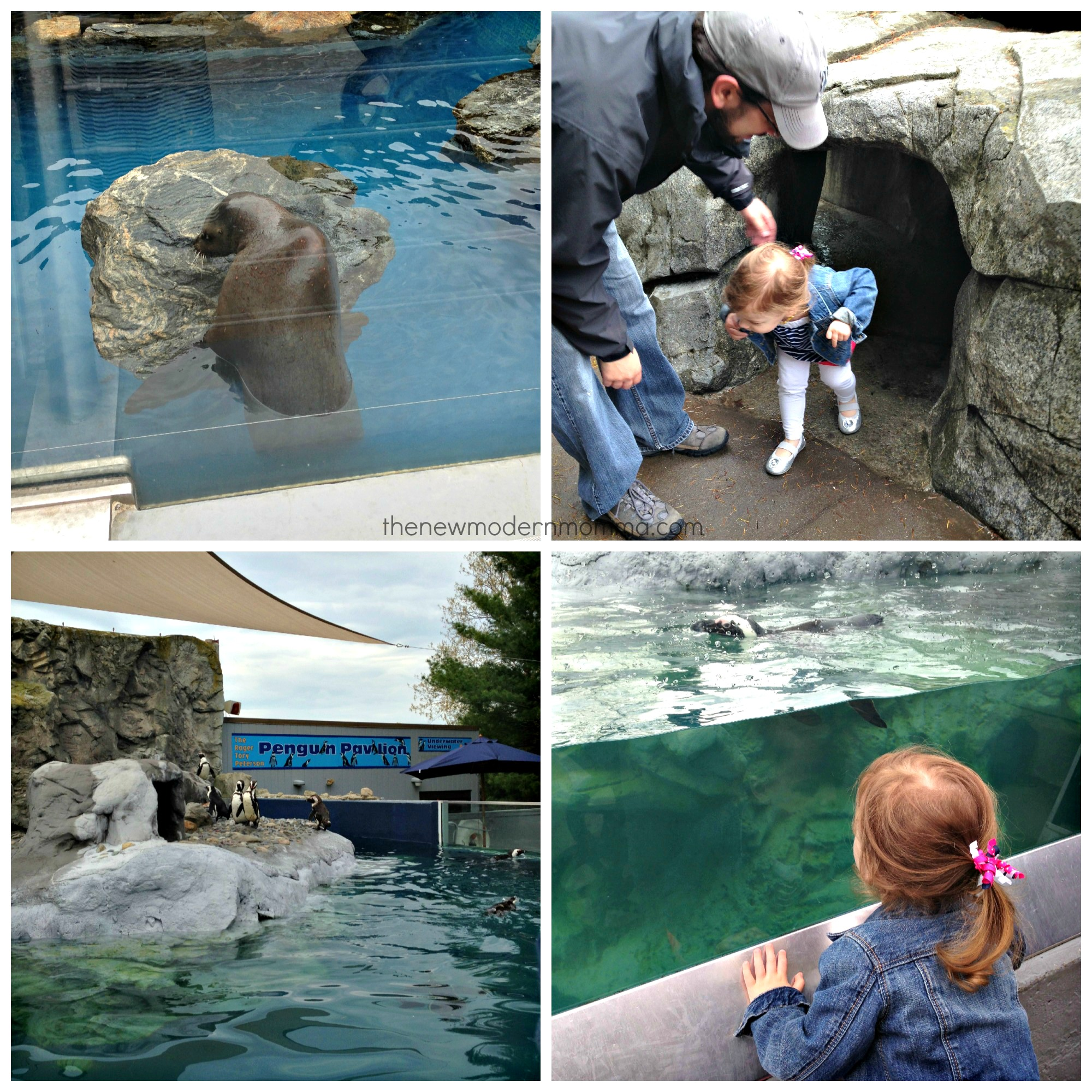 Mystic Aquarium Our Mothers Day Family Day The New