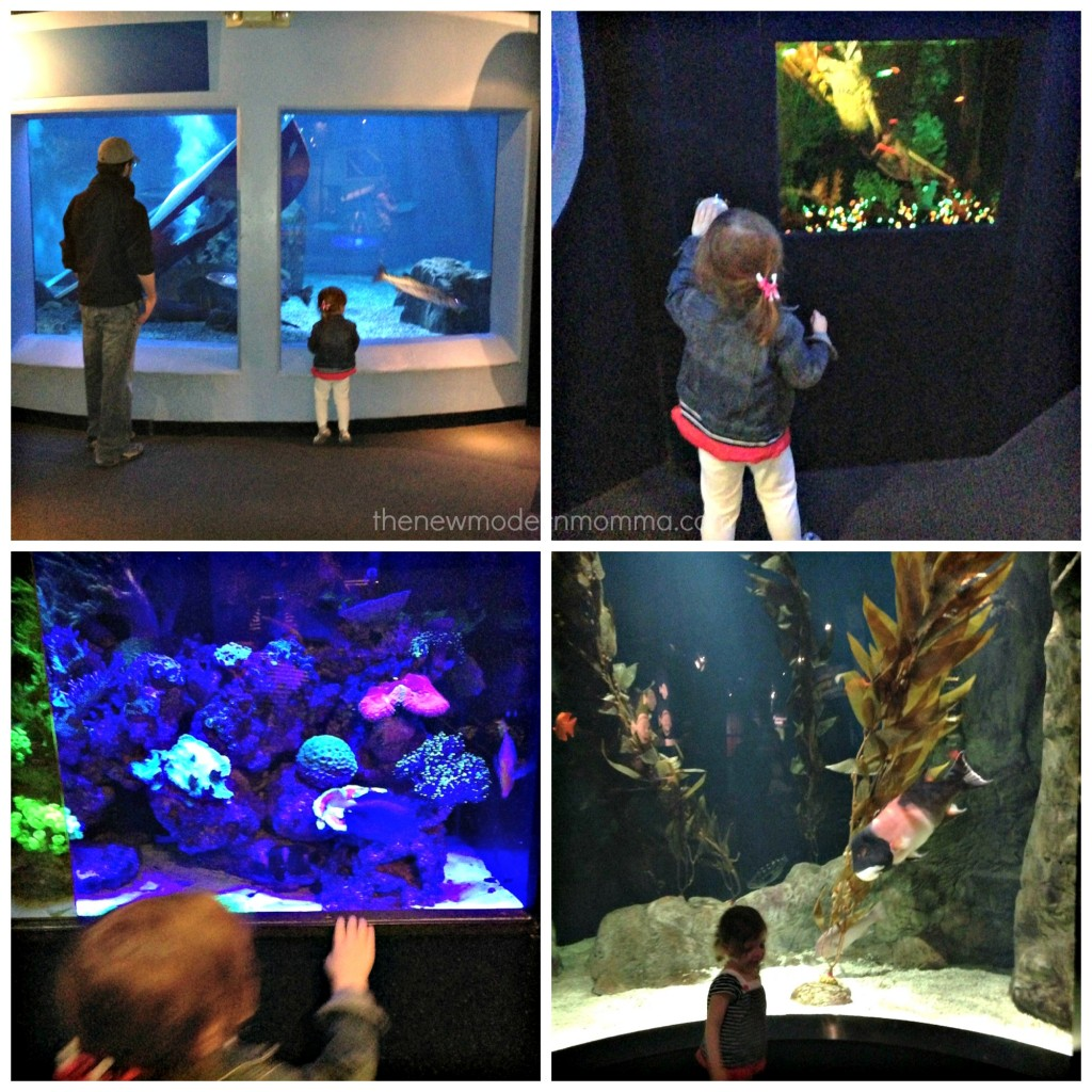 mystic aquarium main gallery