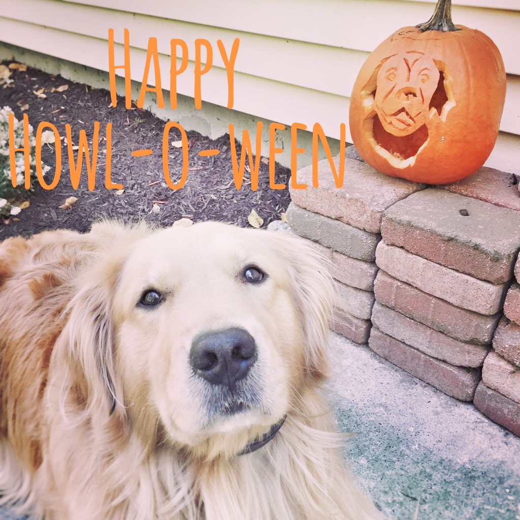 Carve a Pumpkin with Your Dog's Breed! #PurinaPetrified