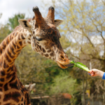 Roger Williams Park Zoo Announces Seasonal Activities