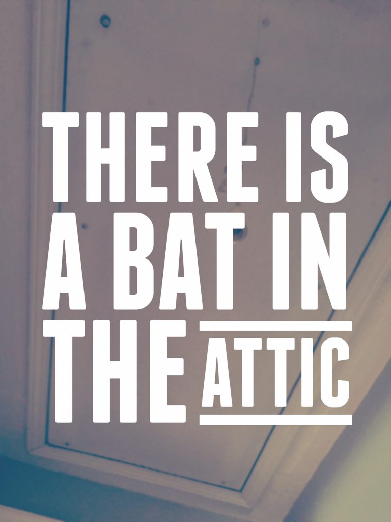 bat in the attic