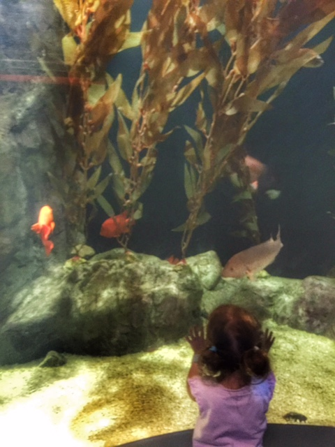 A Day Trip To Beautiful Mystic Aquarium The New Modern Momma