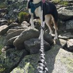 """Human-Canine Fun Reaches New Heights with """"Mutts on the Mountain"""""""