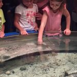 A Day Trip to Beautiful Mystic Aquarium