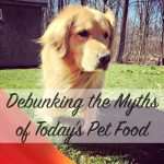 Interview with Dr. Marty Becker – Debunking the Myths of Today's Pet Food