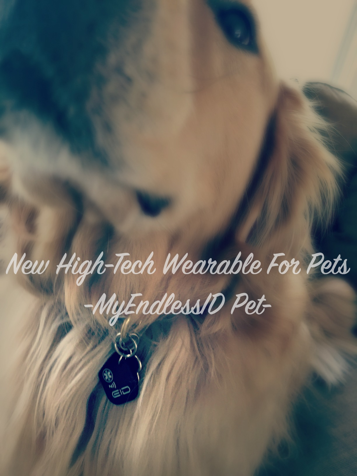 Tech Alert // New High-Tech Wearable For Pets – MyEndlessID Pet