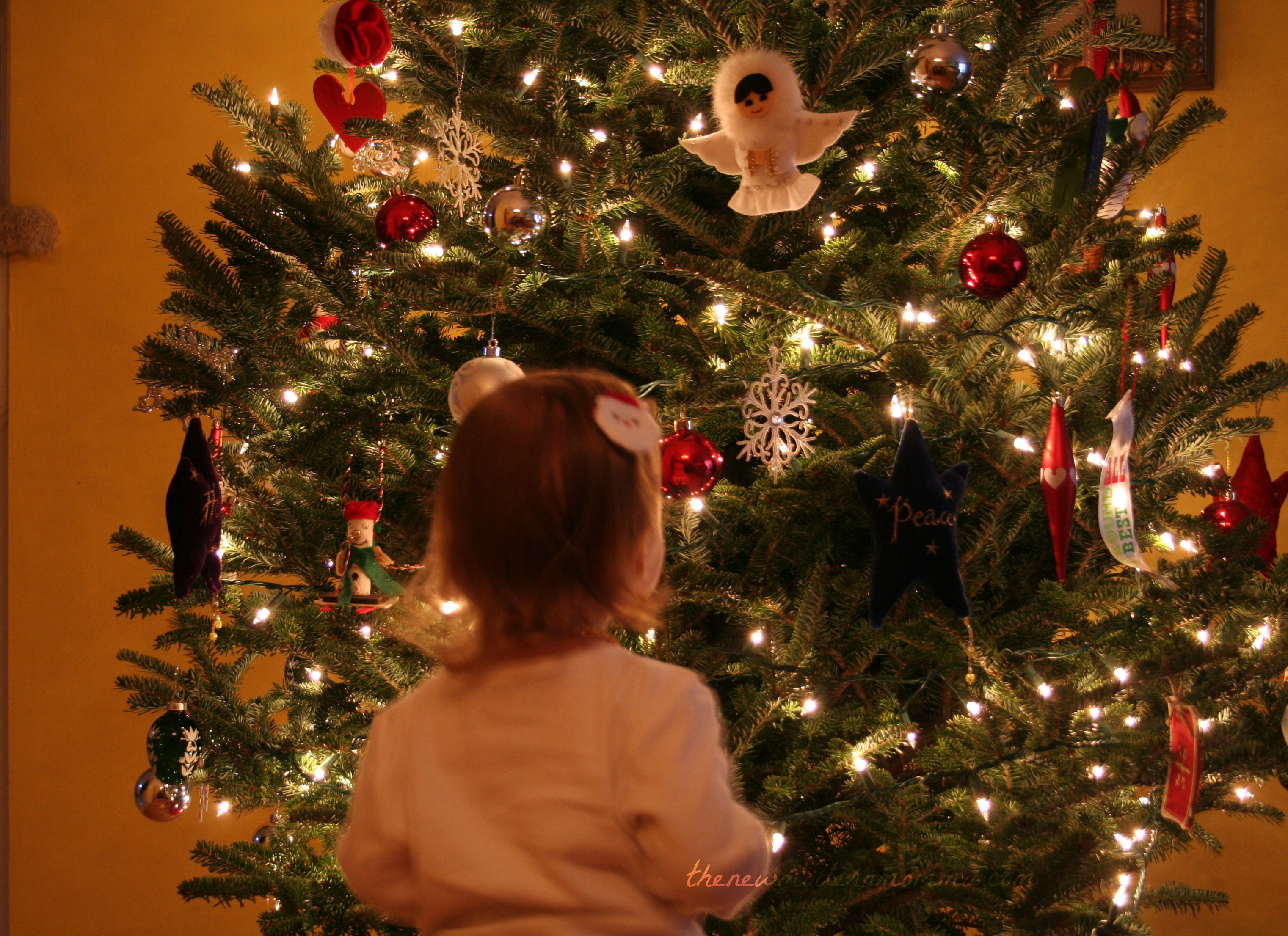 Wordless Wednesday | The 2012 Christmas Tree