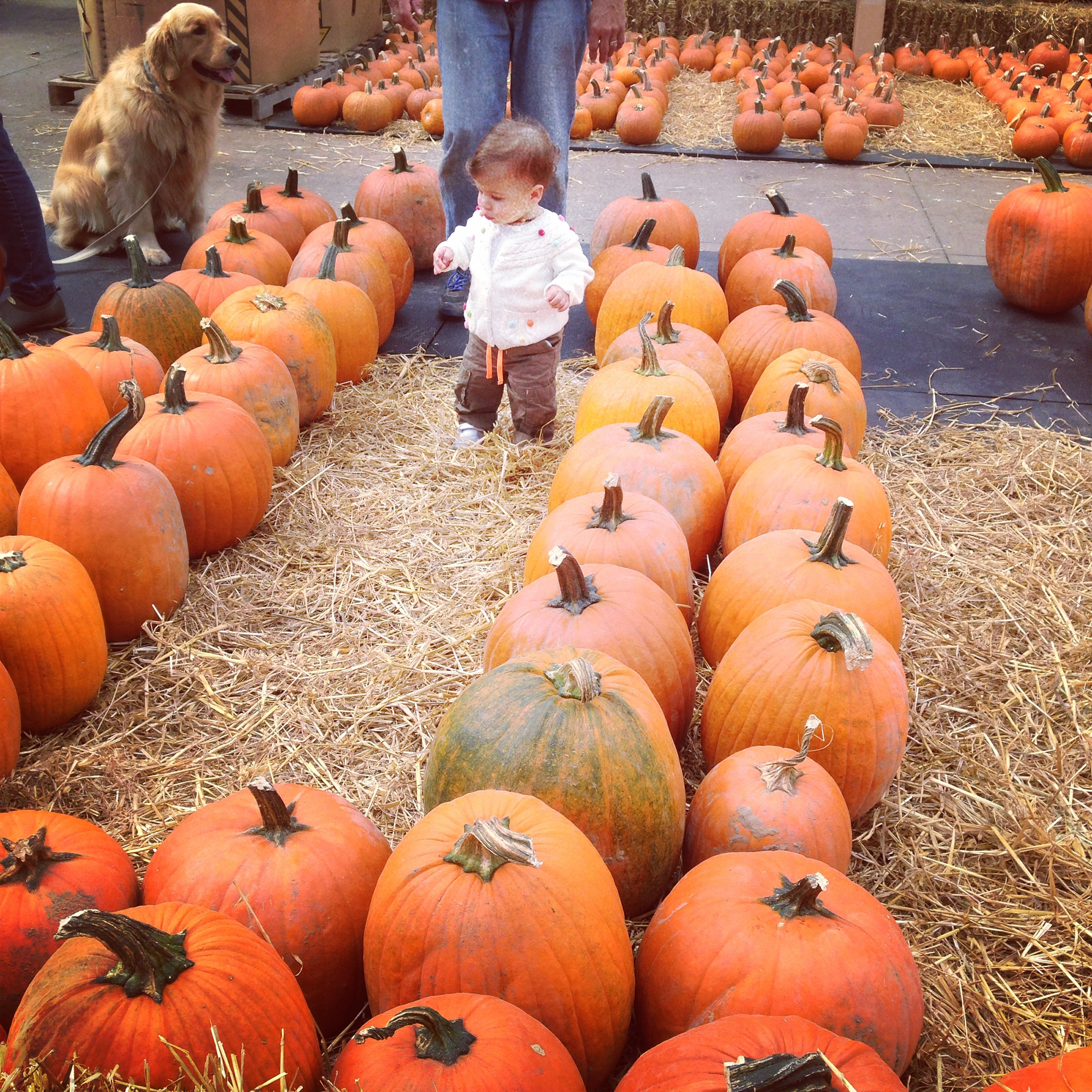 Fall Family Fun at Benedict's Home and Garden