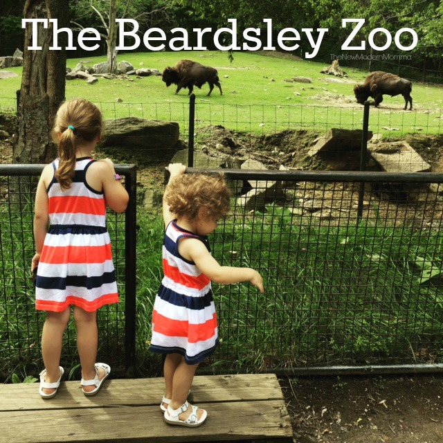 A Day at the Beardsley Zoo