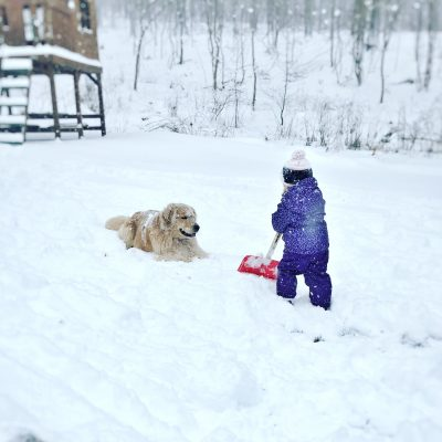 Winter-Wise Weather Tips for Pets
